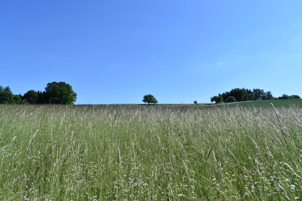 Großes Feld mit klein wirkendem Baum im Hintergrund