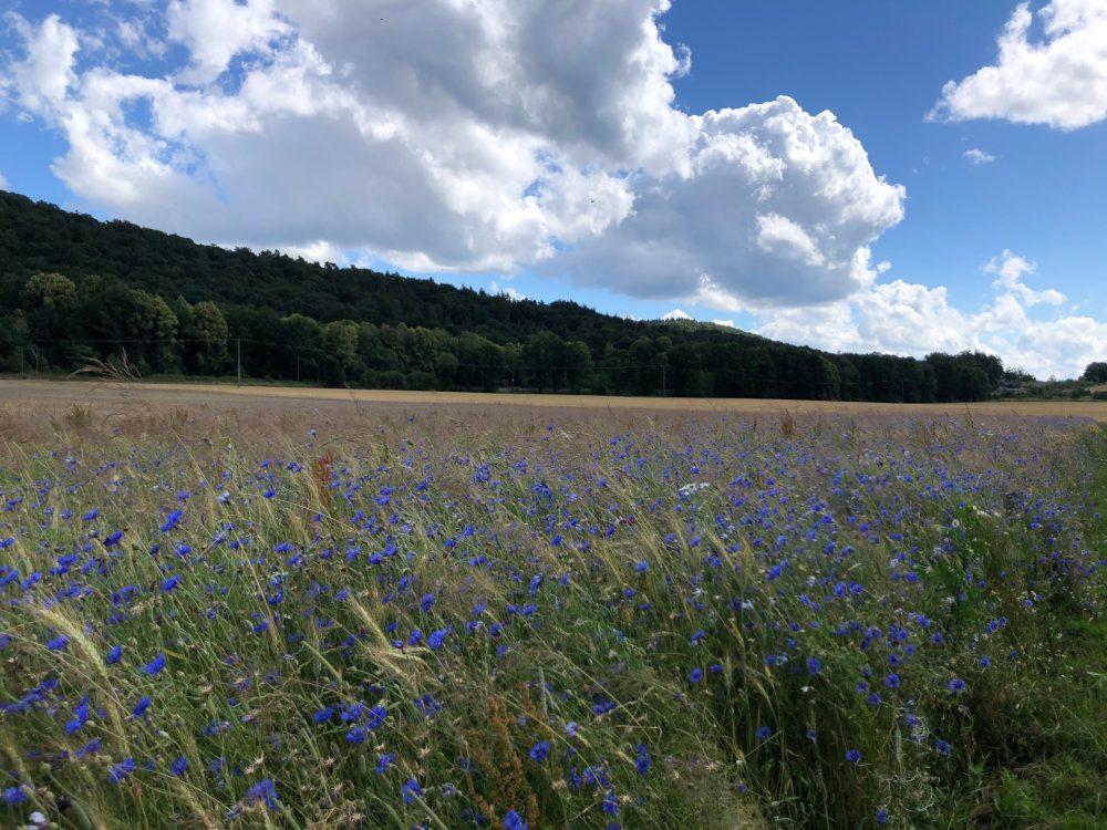 Blick über die Felder und den Wald