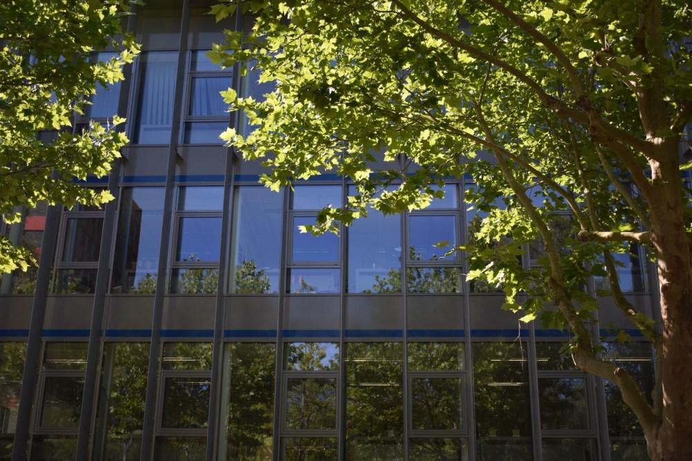 Baum vor einer spiegelnden Hausfassade