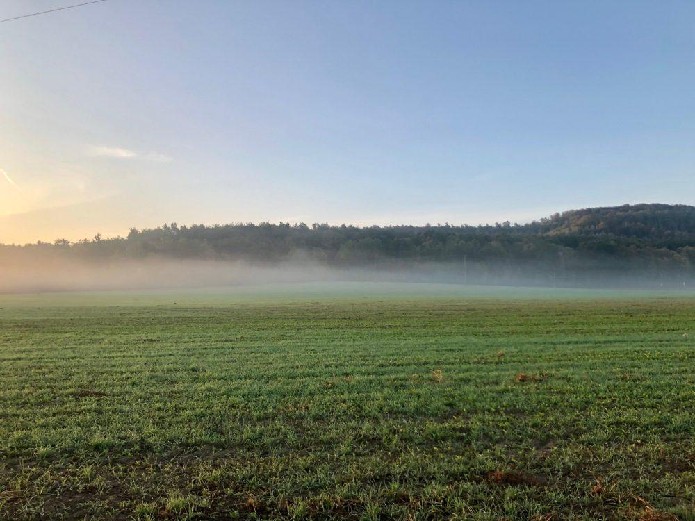 Grünes Feld mit Nebelspuren