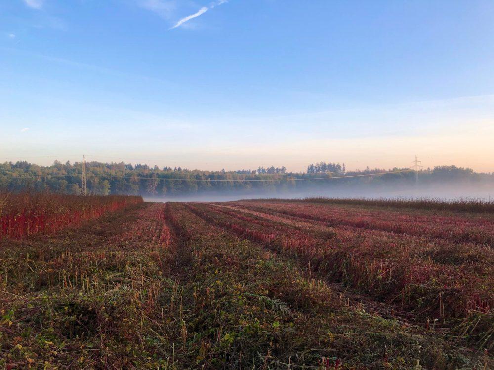 Rotes Feld mit Nebel im Hintergrund