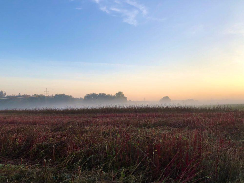 Rotes Feld im Nebelschleier