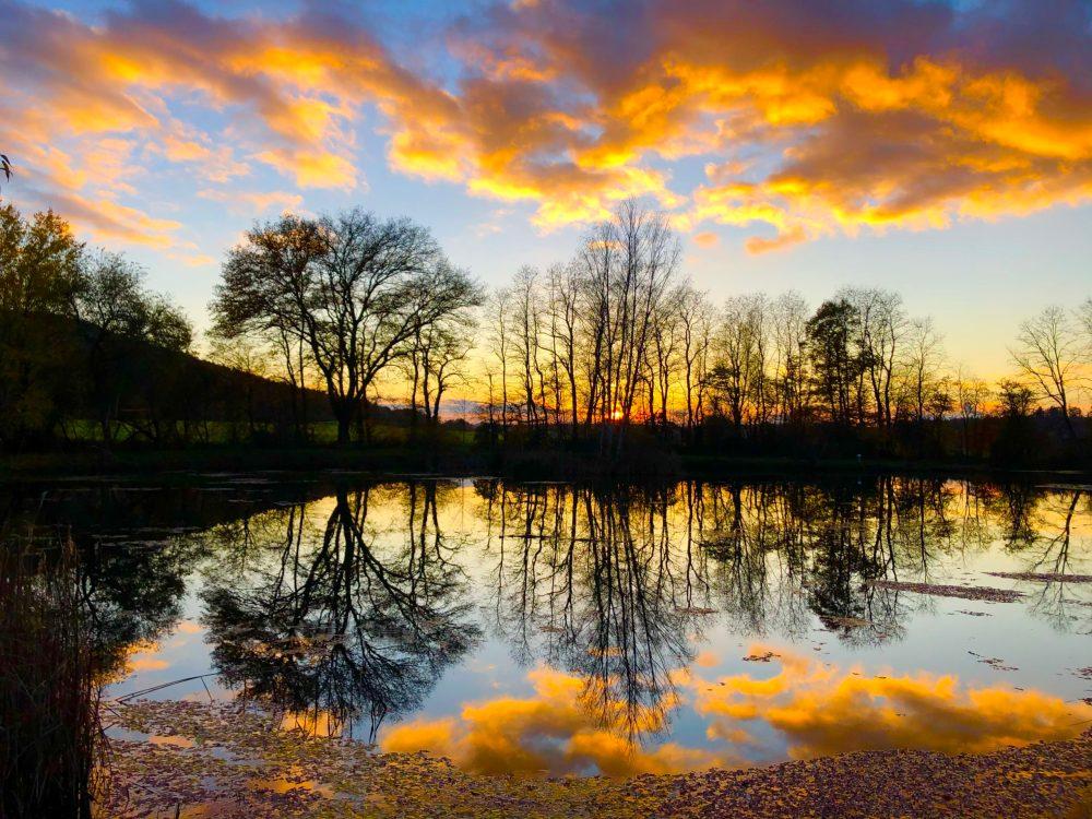 Baum spiegelt sich im Wasser bei goldenem Licht