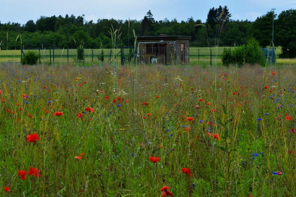 Blumenwiese vor einem Stromhäuschen bei einem Spaziergang am Feld entlang