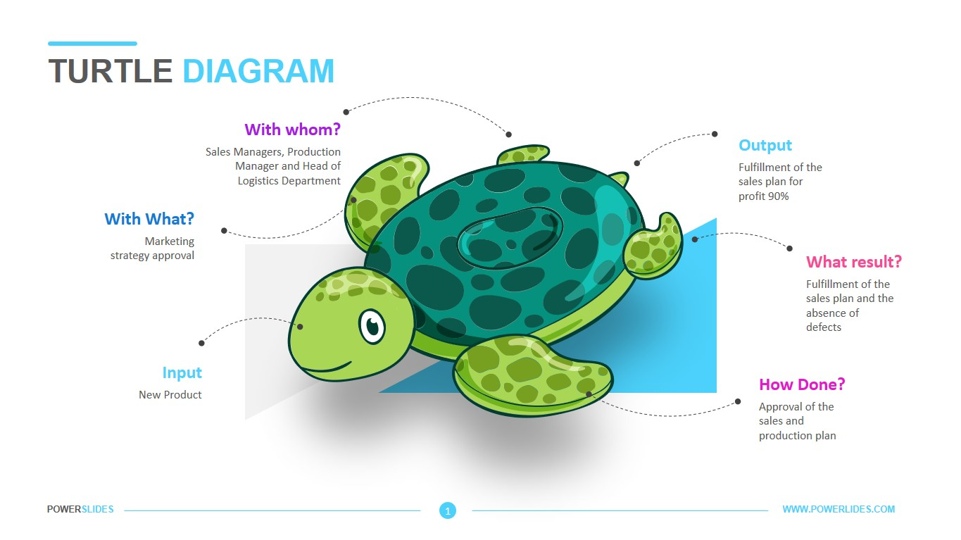 hight resolution of turtle diagram template 12345