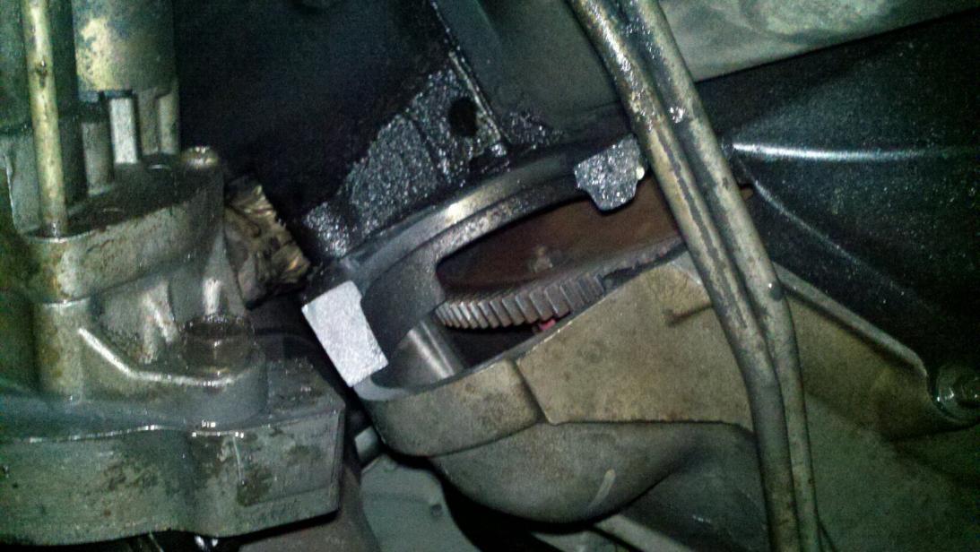 diagram of outside ear whitetail deer skull broken starter mount.... - ford powerstroke diesel forum