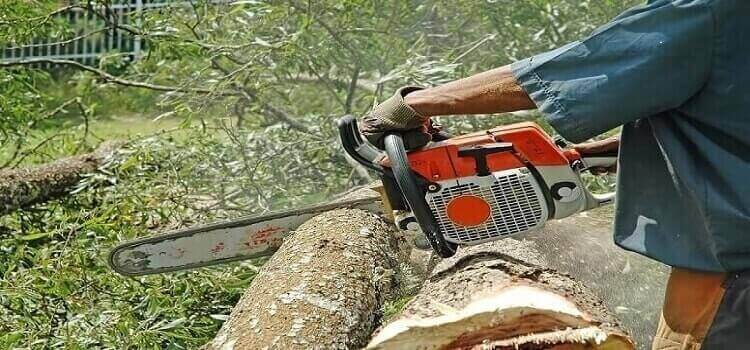 how to cut wood slices with a chainsaw
