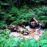 Bistrica: Prelijepa planinska rječica