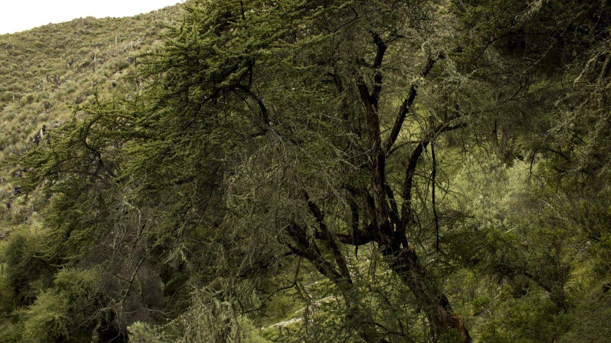Manuel bosques cusco