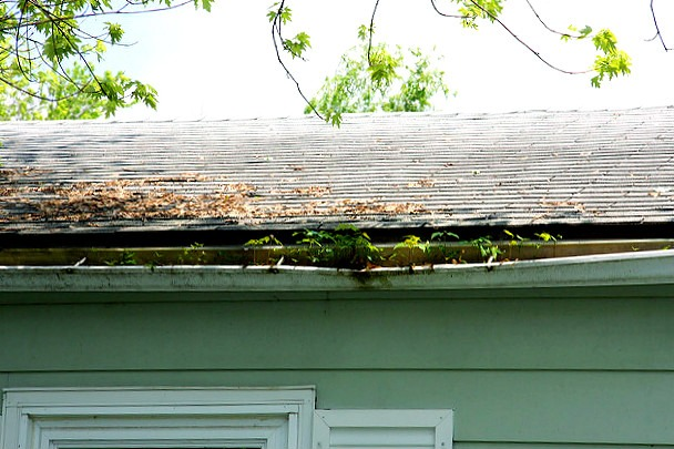 Why you should regularly clean your roof gutters