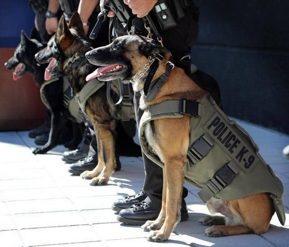 Research Project: K9 Bullet Proof Vests / Body Armour | PPSS Group