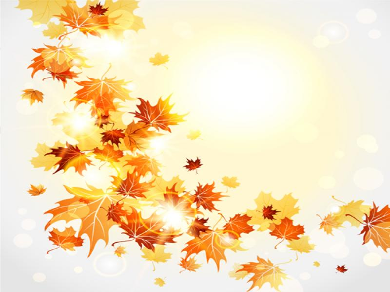 Fall Wallpaper Cartoon Cartoon Fall Leaves Bright Autumn Leaves Vector Download