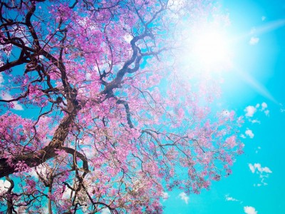 Free Animal Wallpaper Backgrounds Beauty Spring Free Ppt Backgrounds For Your Powerpoint