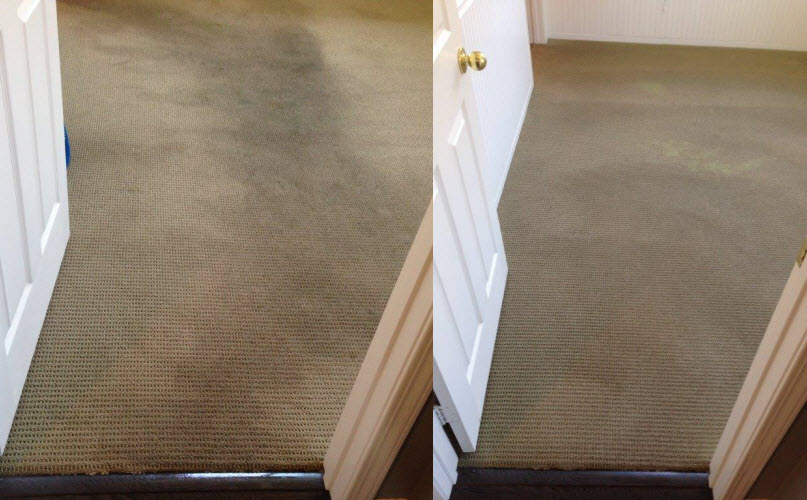 Mira Mesa Carpet Cleaning  Best Carpet In The World