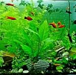 aquarium-323717_1920-200.jpg