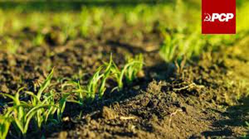 PCP de Ovar exige medidas de apoio à pequena agricultura familiar