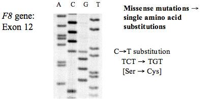 Dna mutational analysis; Mutational Analysis, DNA