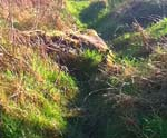 A fox hole in a field illustrating a post about creative writing activities