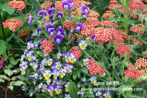 sedum flowers and pansies illustrating an article about inspiration for writers