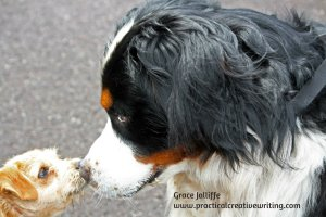 two dogs nose to nose illustrating an article for writers about planning a character