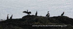 gathering of birds on a rock illustrating an article for writers about getting addicted to social network sites