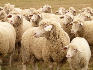 "Does ""Herd Mentality"" Make You Less Attractive?"