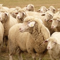 herd mentality dating
