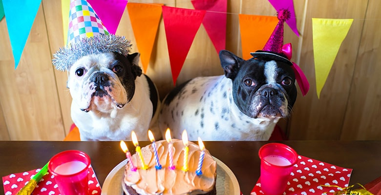 Dogs celebrating their birthday