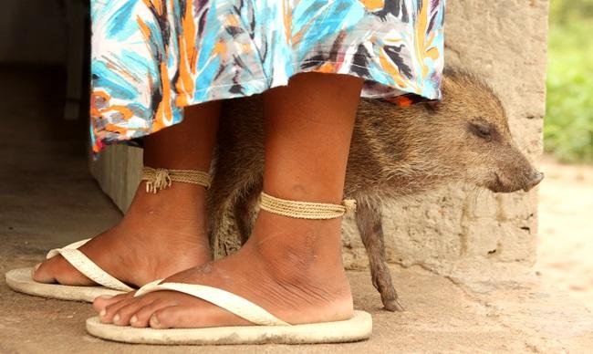 moca xavante porquinho terras indigenas