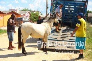 DESDE o início de janeiro, mais de 20 animais foram recolhidos e enviados à Hospedaria
