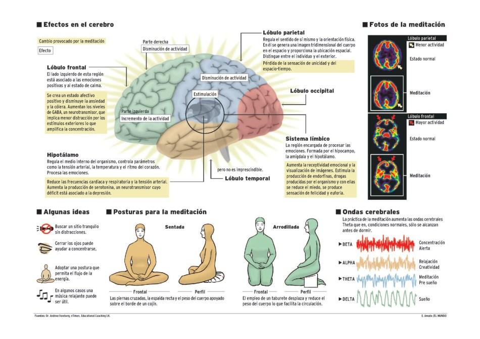 https://i0.wp.com/www.prana.es/uploads/2/5/1/6/25160492/efectos-en-el-cerebro.jpg?resize=950%2C670