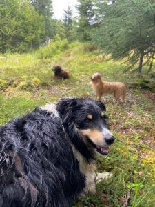 Brandi's three dogs on their daily walk