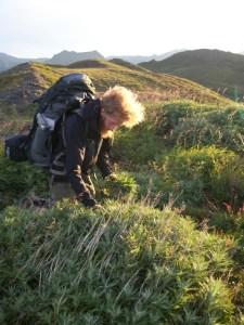 Yarrow gathering native plants