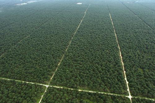 palmoelplantage-indonesien