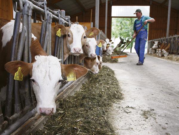 ernte-deutschland-landwirte-misere