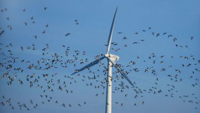 Windräder Vögel