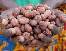 Fairtrade beauty ingredients