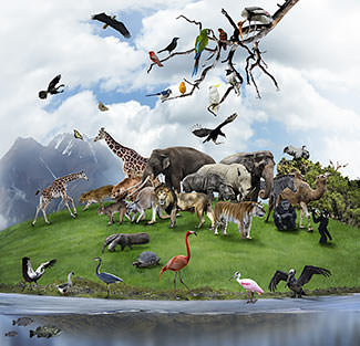 Image result for image of God's creation of the animals