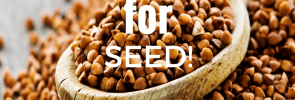 Prayer Points for seed