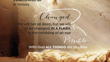 Vineyard of divine possibilities