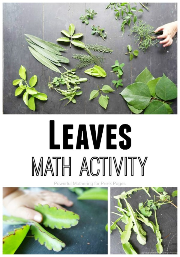 Leaves Nature Math Activity Preschool