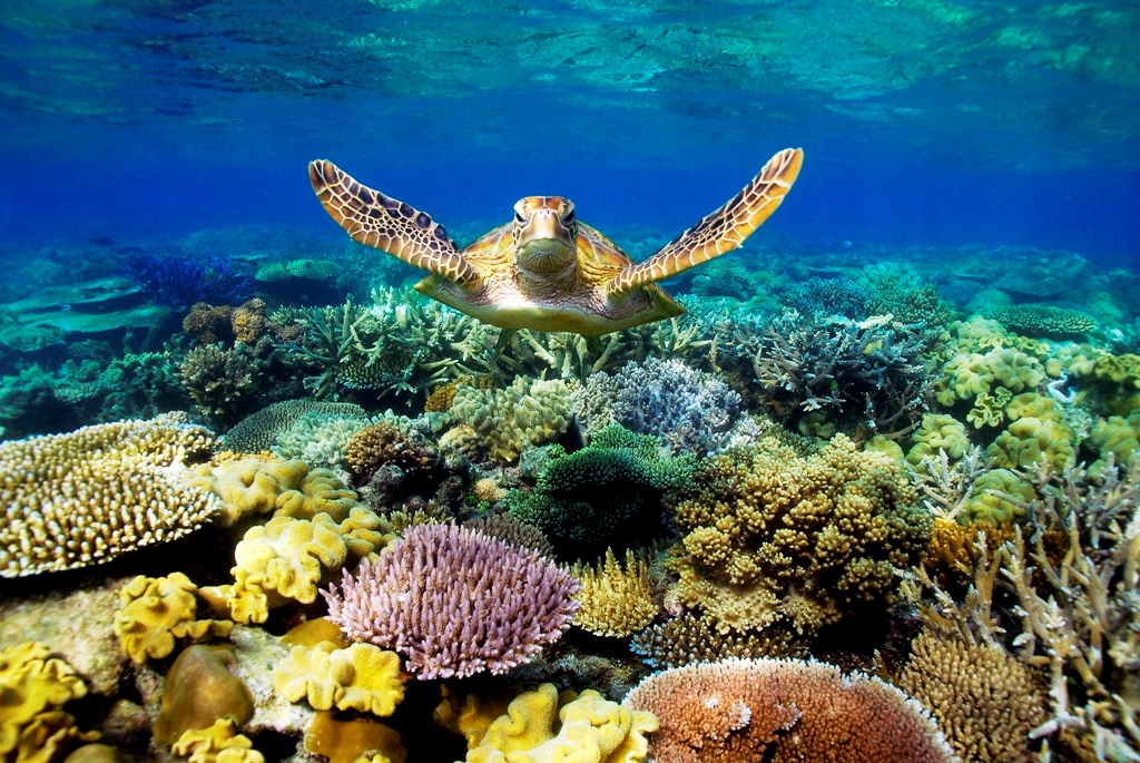 Great Barrier Reef - Great Barrier Reef Animals