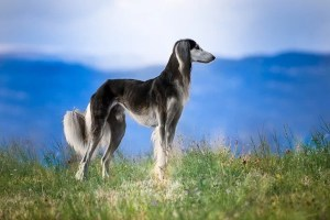 Top 10 oldest dog breeds in the world