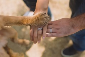 Take care of your dog's paws