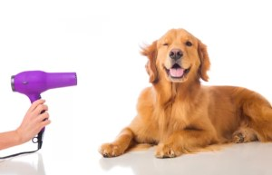 How to care of your dog haird