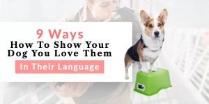 Loving your dog