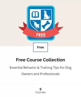 Dog behavior and training tips