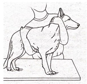how to restrain a big dog - first aid for dogs