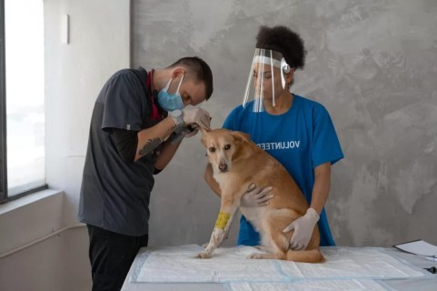 veterinarian doing a dog check up
