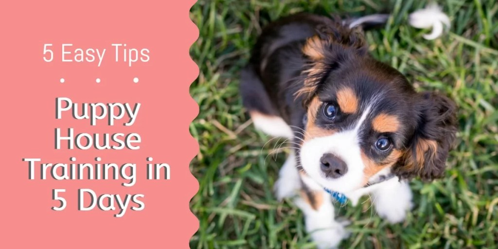 Puppy House Training in 5 Days